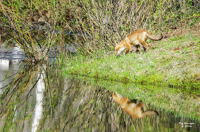 Photograph - Mirror Mirror by Peg Runyan