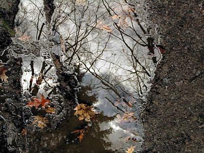 Photograph - Mirror Trees  by Jakub DK