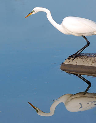 Photograph - Mirrored Egret by Kathleen Stephens