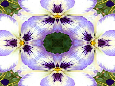 Natural Abstract Photograph - Mirrored Pansies - Horizontal by Jon Woodhams