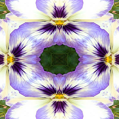 Pansy Photograph - Mirrored Pansies - Square by Jon Woodhams