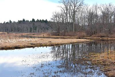 Photograph - Mirrored Swamp 1 by Nina Kindred