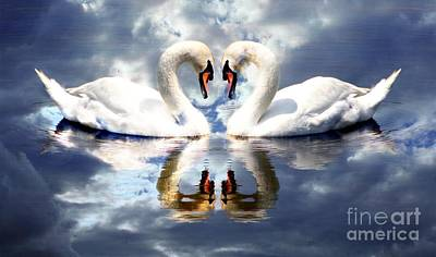 Mirrored White Swans With Clouds Effect Art Print