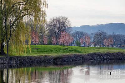 Photograph - Misato Friendship Blossoms East Lake Winona by Kari Yearous