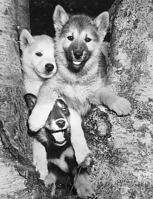 Photograph - Mischievous Pups by M E Browning