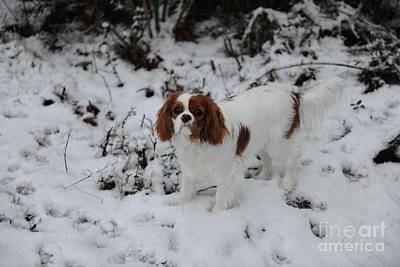 Photograph - Miss Daisy Enjoying The Snow by Dale Powell