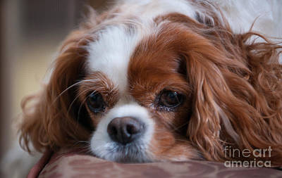 Photograph - Miss Daisy Mae by Dale Powell