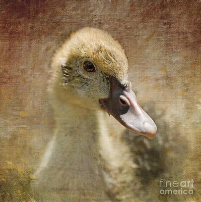 Photograph - Miss Duck by Liz Alderdice