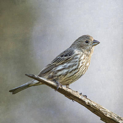 Finch Digital Art - Miss Finch Good Side by Bill Tiepelman
