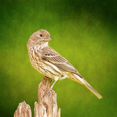 Finch Digital Art - Miss Finch Strikes A Pose On Green by Bill Tiepelman