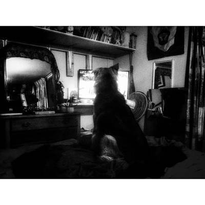 Photograph - Miss Hannah Watches The Pig Scene On by Isabella F Abbie Shores