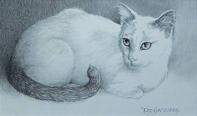House Cats Drawing - Miss Kitty by Tanja Ware