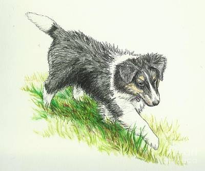Sheepdog Drawing - Miss Mary by Sue Bonnar