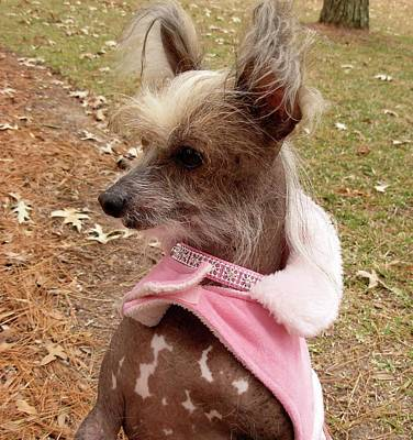 Photograph - Miss Sophie  Pretty In Pink by Jeanne Kay Juhos