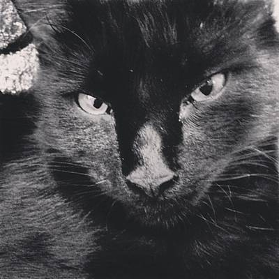 Elvis Photograph - Missed My Baby 🌸 #elvis #missed #him by Courtney Peterson