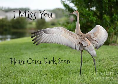 Photograph - Missing You Sandhill Crane by Carol Groenen