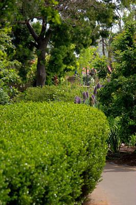 Photograph - Mission San Juan Capistrano Gardens by Brad Scott