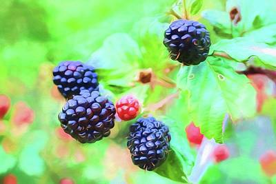 Photograph - Mississippi Blackberries by JC Findley