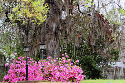 Photograph - Mississippi Charm					 by Catherine Link