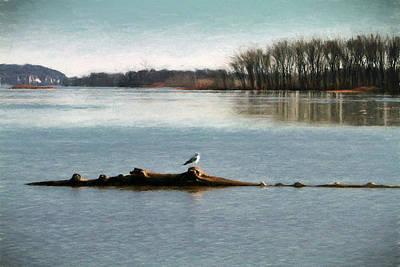 Photograph - Mississippi Gull by John Freidenberg