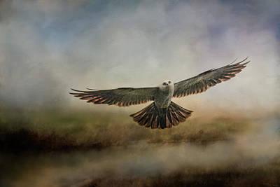 Photograph - Mississippi Kite In The Marsh Raptor Art by Jai Johnson