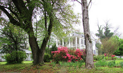 Photograph - Mississippi Mansion  by Catherine Link