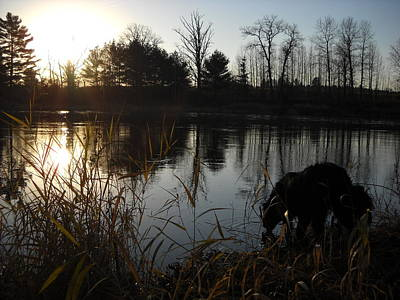 Photograph - Mississippi River Dog Drinking by Kent Lorentzen