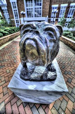 Photograph - Mississippi State Bulldog by JC Findley