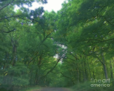Photograph - Missouri Forest Arches by Luther Fine Art