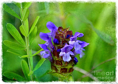 Photograph - Missouri Wildflower - Prunella Vulgaris - Self-heal by Debbie Portwood