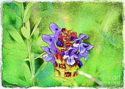 Photograph - Missouri Wildflower - Prunella Vulgaris - Self-heal - Digital Paint 1 by Debbie Portwood