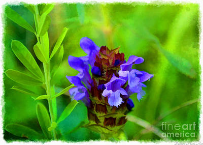 Photograph - Missouri Wildflower - Prunella Vulgaris - Self-heal - Digital Paint 2 by Debbie Portwood