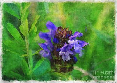 Photograph - Missouri Wildflower - Prunella Vulgaris - Self-heal - Digital Paint 3 by Debbie Portwood