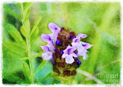 Photograph - Missouri Wildflower - Prunella Vulgaris - Self-heal - Digital Paint 4 by Debbie Portwood