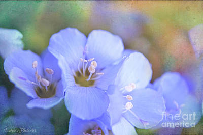 Photograph - Missouri Wildflowers 5  - Polemonium Reptans -  Digital Paint 5 by Debbie Portwood