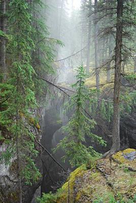 Mist Forest Art Print by Kim Blumenstein