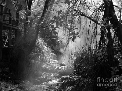 Mist In The Jungle Art Print