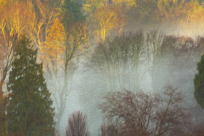 Photograph - Mist In The Park by Sheldon Bilsker