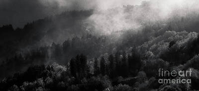 Misty Photograph - Mist In The Trees II by Robert Brown