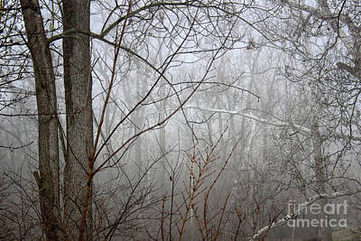 Photograph - Mist Of Morning by Karen Adams