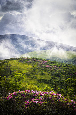 Photograph - Rhododendrons - Roan Mountain by Victor Ellison