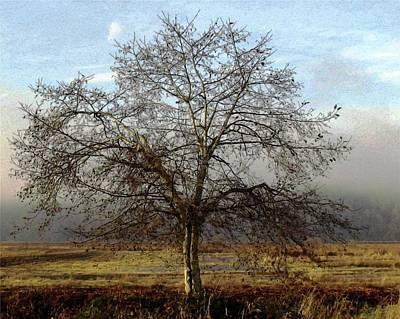Photograph - Mist Rising by I'ina Van Lawick