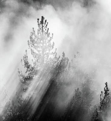 Mist Shadows Art Print