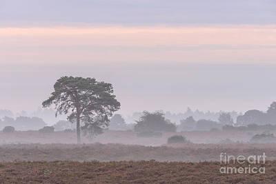 Mist Stripes New Forest Art Print by Richard Thomas