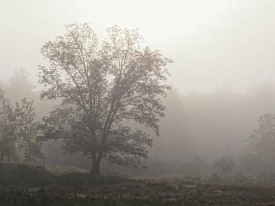 Photograph - Mist Tree by MTBobbins Photography