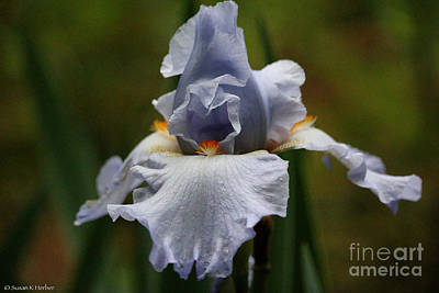Photograph - Misted Iris by Susan Herber