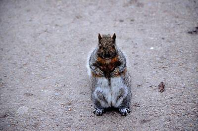 Pineapple - Mister Squirrel  by Charles J Pfohl