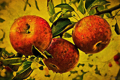 Photograph - Mister's Apples by Anna Louise