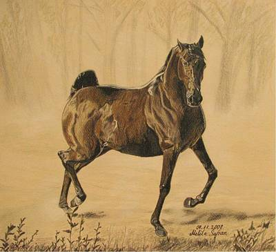 Art Print featuring the drawing Mistical Horse by Melita Safran