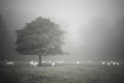 Trust Photograph - Misty And Muted by Chris Fletcher